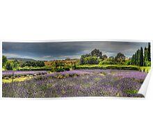 Lavender Dreams - Lavendula Farm & Gardens, Daylesford Victoria - The HDR Experience Poster