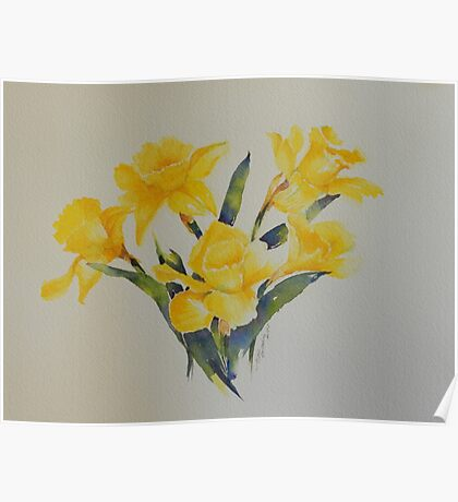 Daffodils           106 Poster