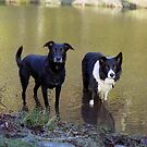 Shela and Indy at the pond. by Michael Haslam
