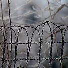Fence Line - Derby New Brunswick Canada by loralea