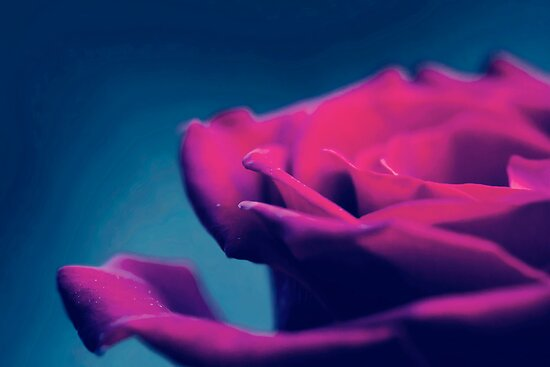 Saturated Love by Josie Eldred
