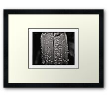 Tiny Worlds 02 Framed Print