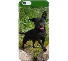 Black Chihuahua dog. iPhone Case/Skin