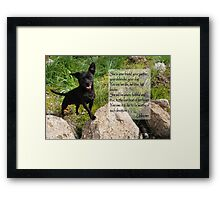 Black Chihuahua dog. Framed Print