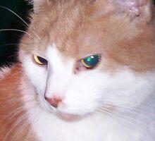 One eye yellow, one blew left by Dan Wilcox