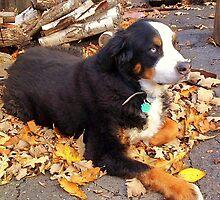 Chloe in fall by Dan Wilcox