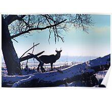 Young Red Deer Stag Poster