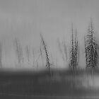 Abstruse by Robin Webster