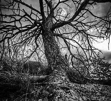 Arterial by Bob Larson