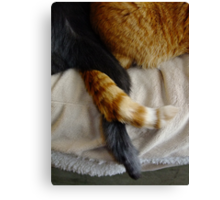 Cat Love Canvas Print