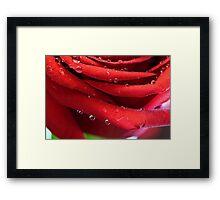 Petal Drops Framed Print