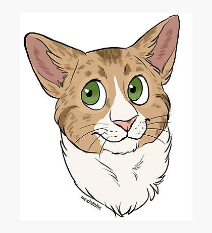Funny the Cat - Custom Photographic Print