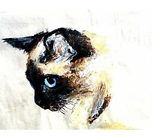 Siamese Cat Acrylics On Paper Photographic Print