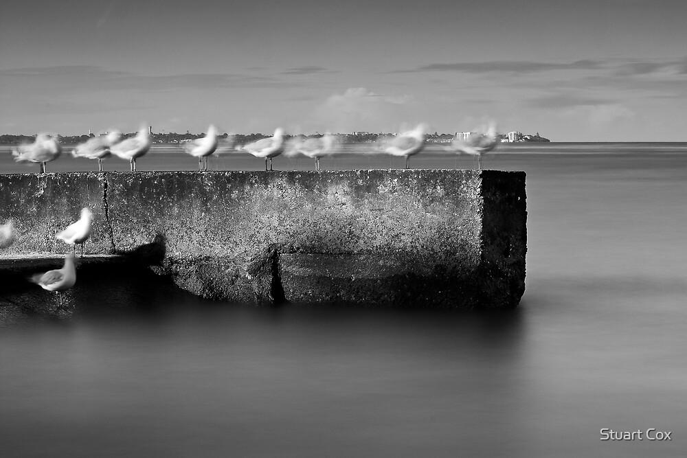 Ghostly Gulls by Stuart Cox