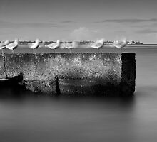 Ghostly Gulls by Stuart Cox