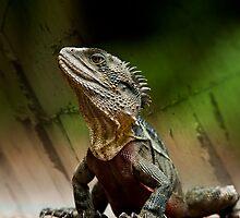 Proud Lizard by Stuart Cox