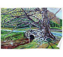 'The Old Tree at Bass Lake' Poster