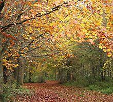 Llangattock Beechwoods by Jane Corey