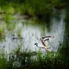 Killdeer by Lee LaFontaine