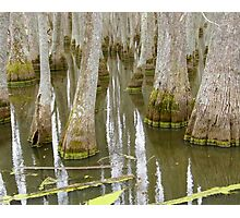 Bizarre Cypress Photographic Print