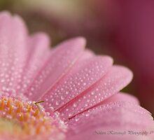 Delicate Gerbera by Noleen  Kavanagh