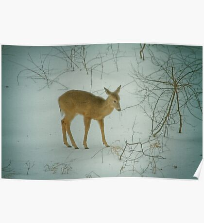 Deer Winter Poster