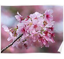 Sakura pink Poster
