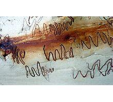 Scribbly Gum, Noosa, QLD, Australia - 2 Photographic Print