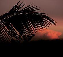 Tropical Silhouette 2 by Ellen Cotton