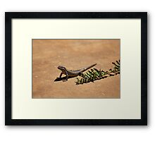 Interacting with wildlife - African Striped Skink Framed Print