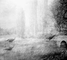wild turkeys, green county, ky by Marie Monroe