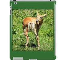 Funny Pose Of An African Steenbok Antelope iPad Case/Skin