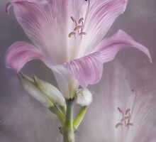 Lily  Collage by Dianne English