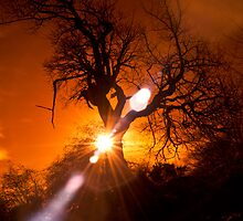 roslin glen tree and sun by TheLostArt