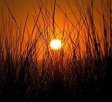Grassy Sunrise by Travis Easton