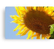 Sunflower Shining Canvas Print