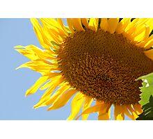 Sunflower Shining Photographic Print