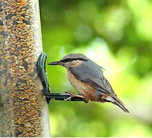 Nuthatch #2 Photographic Print