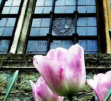 Barking Abbey Tulips by Trudi Skinn