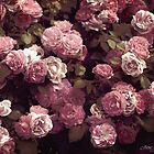 ....vintage roses............. by Jane Anastasia Studio
