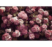 ....vintage roses............. Photographic Print