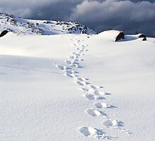 Footprints in the Snow by Trudi Skinn