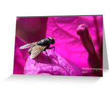 Fly ! Greeting Card