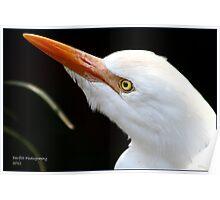 Egret ! Poster