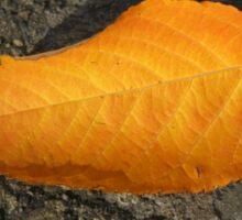 Sunlit Russet Leaf Sticker