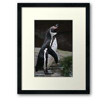 Wet Penguin Framed Print