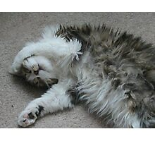 The Shaggy Cat Photographic Print