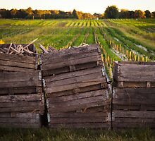 Crates in the Field by Alex Meyer