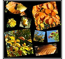 Autumn Leaves, Flowers and Berries Collage Photographic Print