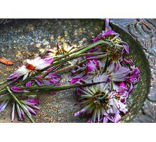 Spent Blume Photographic Print